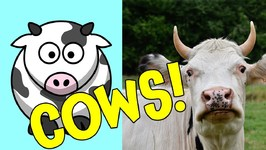 Cows - Ultimate Cow Facts and Interactive Cow Games for Preschoolers and Toddlers