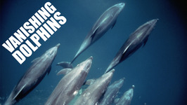 Vanishing Dolphins