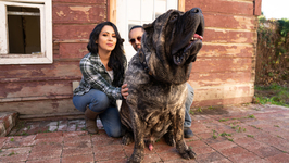 Ultimate Guard Dog Weighs 200lbs - Truly
