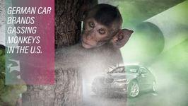 Choke Valves Suffocating Monkeys At Volkswagen