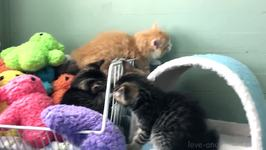 These Three Kittens Know How to Put Up a Good Fight