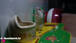 Hamster Falls Down A Hole