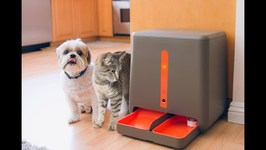 10 Things Your Cat Wants On Amazon