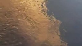 Shark Makes Surprise Appearance in Northern New South Wales River
