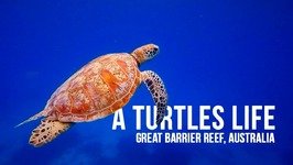 Life as a turtle on Australia's Great Barrier Reef