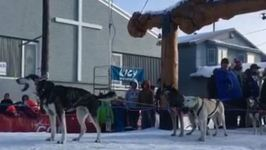 Iditarod Dog Team Barks, Howls After Fourth-Place Finish
