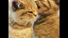 5-Month-Old Cats Lovingly Groom Each Other