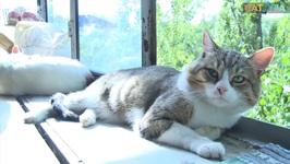 Chewy Kitties