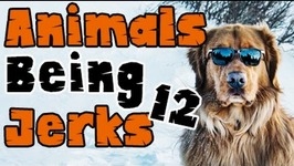 Thug Life - Animals Being Jerks - 12
