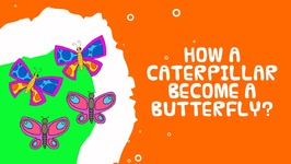 How Caterpillars Turn Into Butterflies - Science Facts for Kids