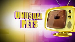 Assignment America - Unusual Pets