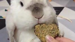 Fluffy Bunny Enjoys Sweet Heart Treat