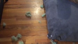 Dogs Put Themselves Behind Bars After Sitter Finds Ripped Bed