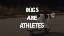 These Dogs Have Amazing Hidden Talents