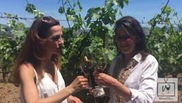 How To Make Wine With Julie Johnson: Grape To Glass