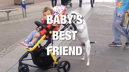 A Baby's Best Friend Is a... Dog