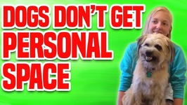 Dogs Don't Get Personal Space - Funny Dog Compilation
