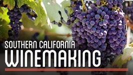 Winemaking in Southern California  How to Brew Everything