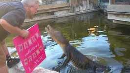 Gators Get Meaty Treat From Their Valentine