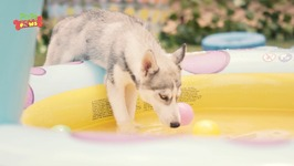Adorable Puppies Playing Together - Cute Dog Video