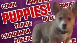 Puppies - Cutest Dogs Compilation