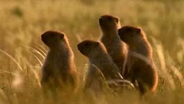 Episode 12 Season 1 Planet Wild - Marmot: Wild Frontier