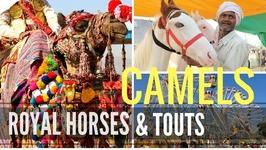 PUSHKAR CAMEL FAIR - PUSHKAR, INDIA Travel
