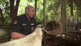 S01 E04 - Monkeys - Animal Rescue Thailand
