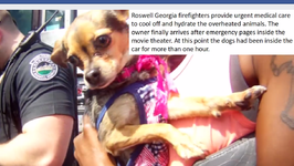 Dogs Rescued From Hot Car in Roswell, Owner Cited With Animal Cruelty