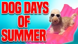 Dog Days of Summer - Funny Dog Compilation