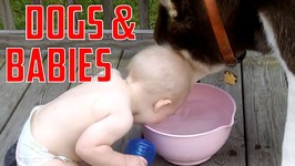 Babies And Doggies - Music Montage Week