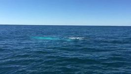 Rare Albino Whale Migaloo Follows Tourist Boat at Port Macquarie
