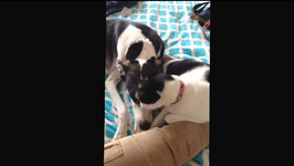 Cat and Dog are the Best of Friends