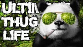 Thug Life - Animals Being Jerks - 8