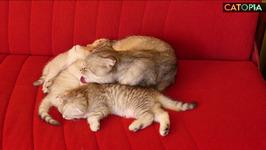 September Funny 12 Mom and three kittens