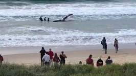 Severe Weather Can Help Beached Juvenile Humpback, Says Rescuer