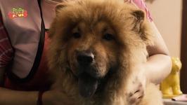 Dog Enjoying Head Massage - Funny Animal Video