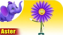 Aster - Flower Song