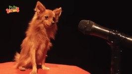 Cute Singing Puppies