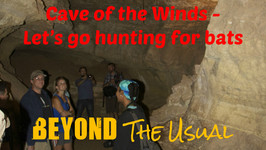 Bat Hunting In The Cave Of The Winds
