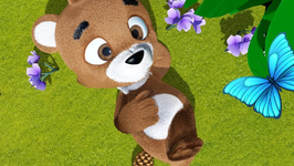 Little Teddy Brown Bear