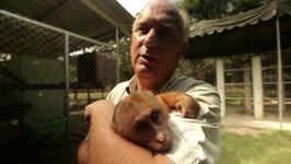 S01 E05 - Slow Loris - Animal Rescue Thailand