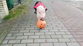 Moritz the Pig Goes Trick-or-Treating