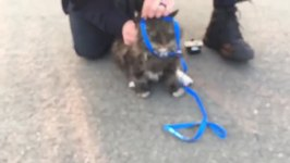 Cat Rescued From Beneath Car in Aftermath of Sonoma County Fires