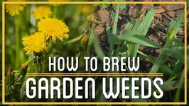 Crabgrass Beer & Dandelion Wine  How to Brew Everything  Weed Booze