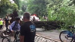 Tree Falls in NYC's Central Park Injuring 4, Reports Say