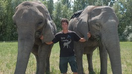20-Year Old Acrobat Performs Tricks With His Elephant Family