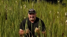 How To Forage And Prepare Cattails