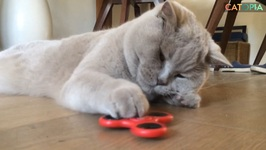 Cats and fidget spinners Episode 1