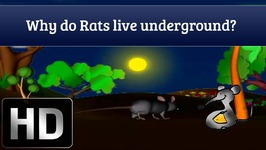 Why Do Rats Live Underground